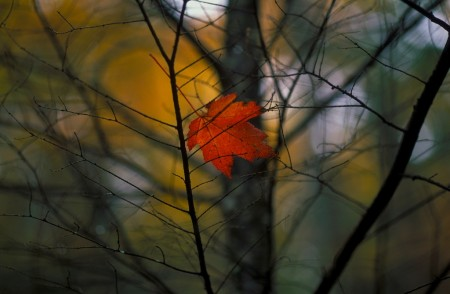 Lone Leaf by Jim Crotty