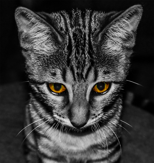 14-cat-sad-face-black-white-yellow-eyes