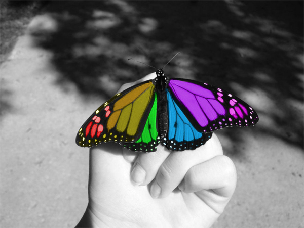 19 color splash butterfly hand