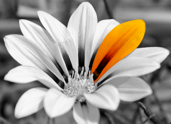 20yellow color splash flower