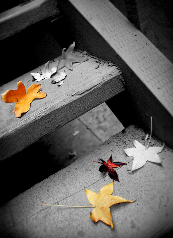 27-autumn-leaves-colored-black-and-white