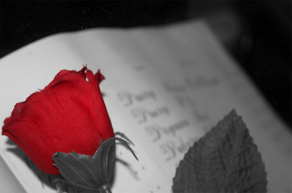 32 black white book red rose