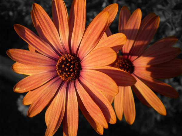38-color-splash-sunset-flower