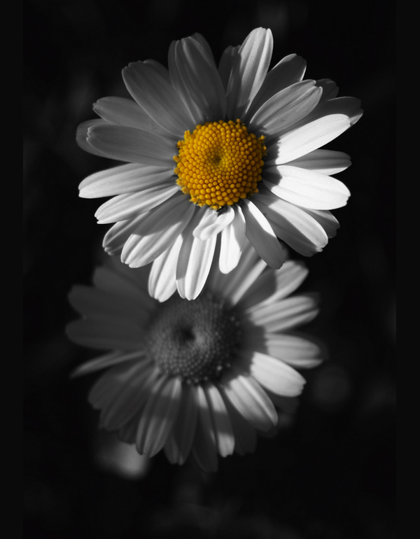 6 flowers black white yellow from dark