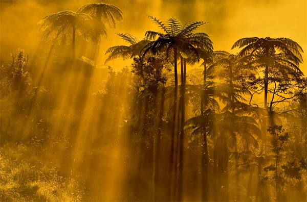 Charm And Mystery Of Foggy Photography Photodoto