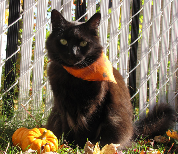 Halloween Special: Black Cats Photos - Photodoto