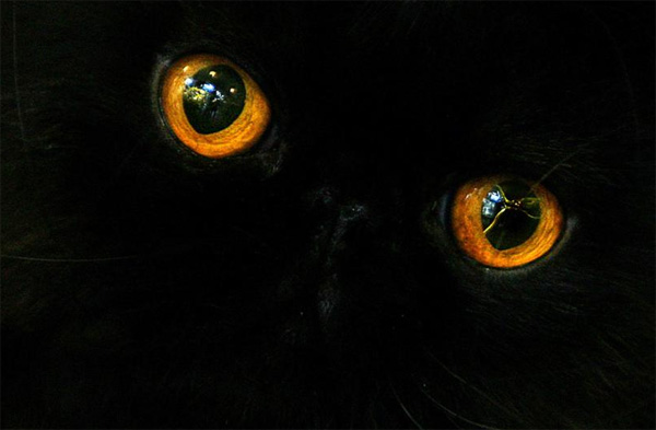 black cats pictures