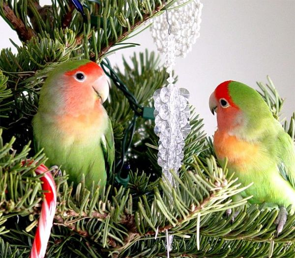 Two parrots on a Christmas tree