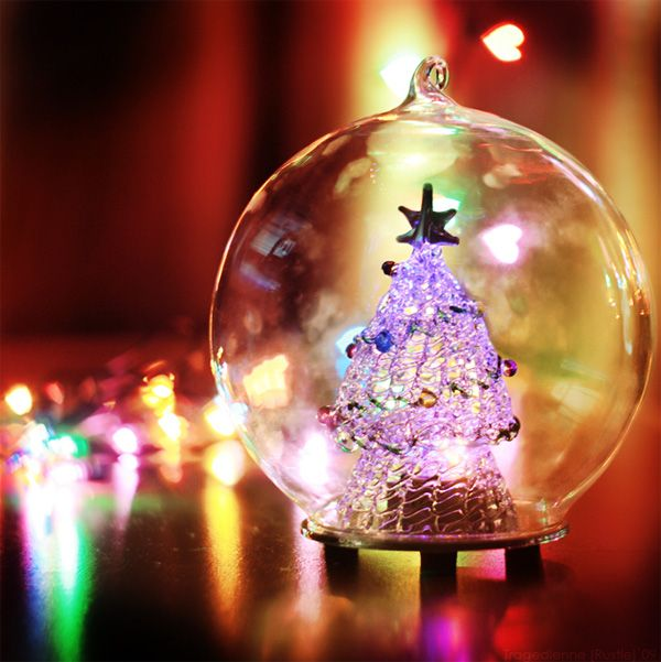 Christmas tree in a glass ball