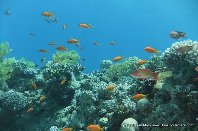 Tips on how to capture underwater photos