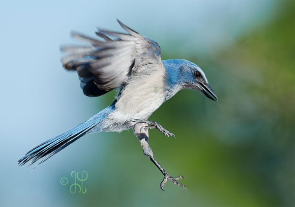 photo of a flying bird