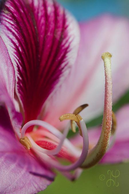 pink flower - macro photography