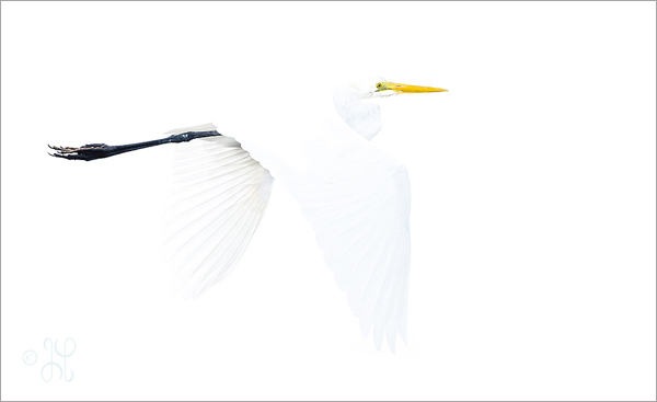 photo of a tri-colored bird on the lake