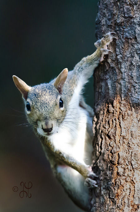 photo of a squirrel on a tree