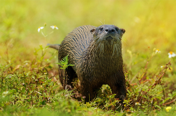 photo of a little otter playing