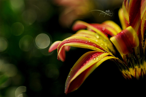 Photo by Mohan Duwal: close-up photo of a flower