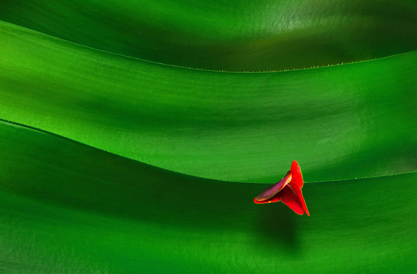 minimalist photography: small red flower on green background