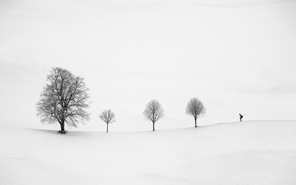 minimalist black and white photography: trees in the snow