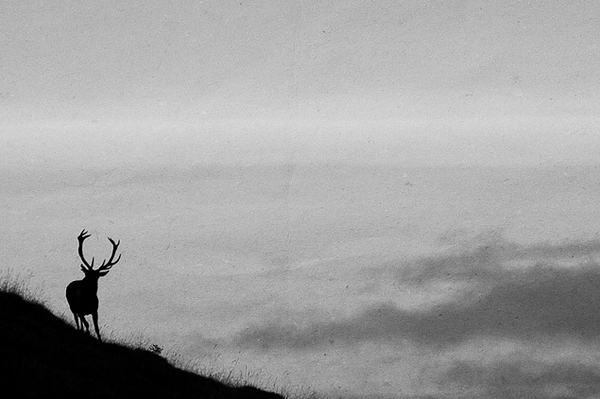 minimalist photography of a deer