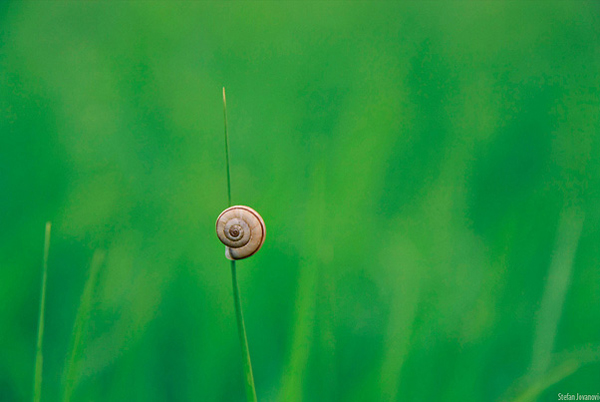 minimalist photography of a snail