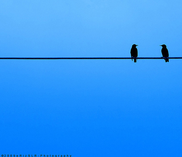 minimalist photography of two birds