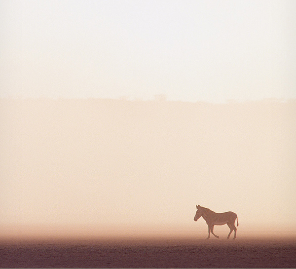 minimalist photography of a horse