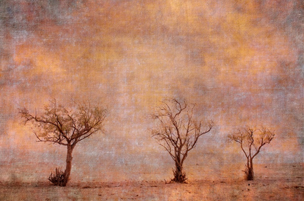 Three trees like painted ones