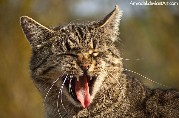 The cat from the zoo - a photo of an angry can