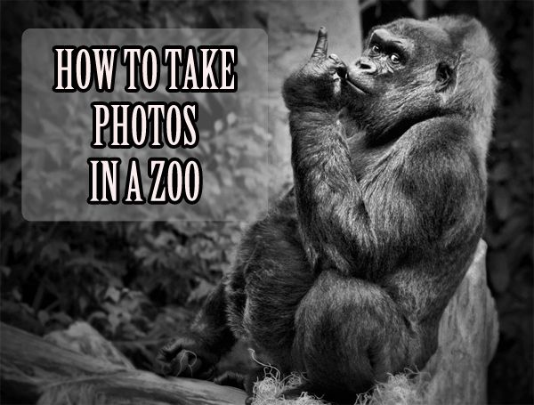Some tips on how to take animals photography in a zoo