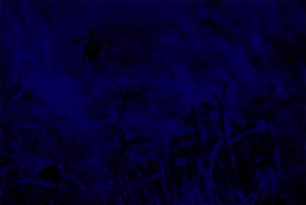 Navy-blue-filled layer at 100% Opacity. Blending mode: Multiply