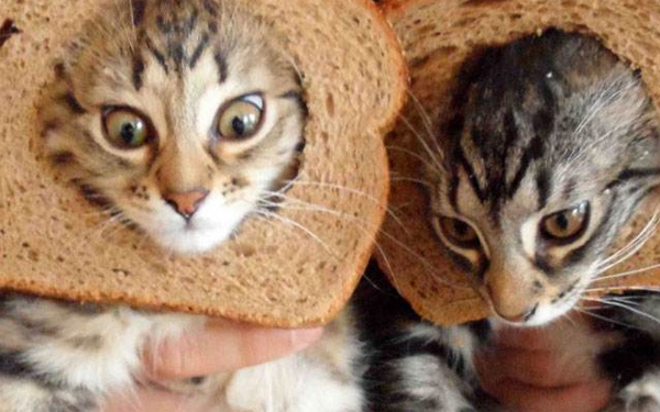 Catbreading_2 by WebAndroid