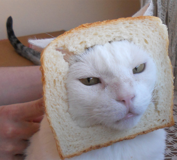 Cat breading niko 3 by luisito_4