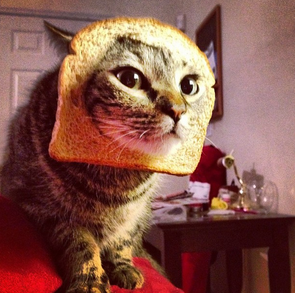 Catbreading by Carolinejperez