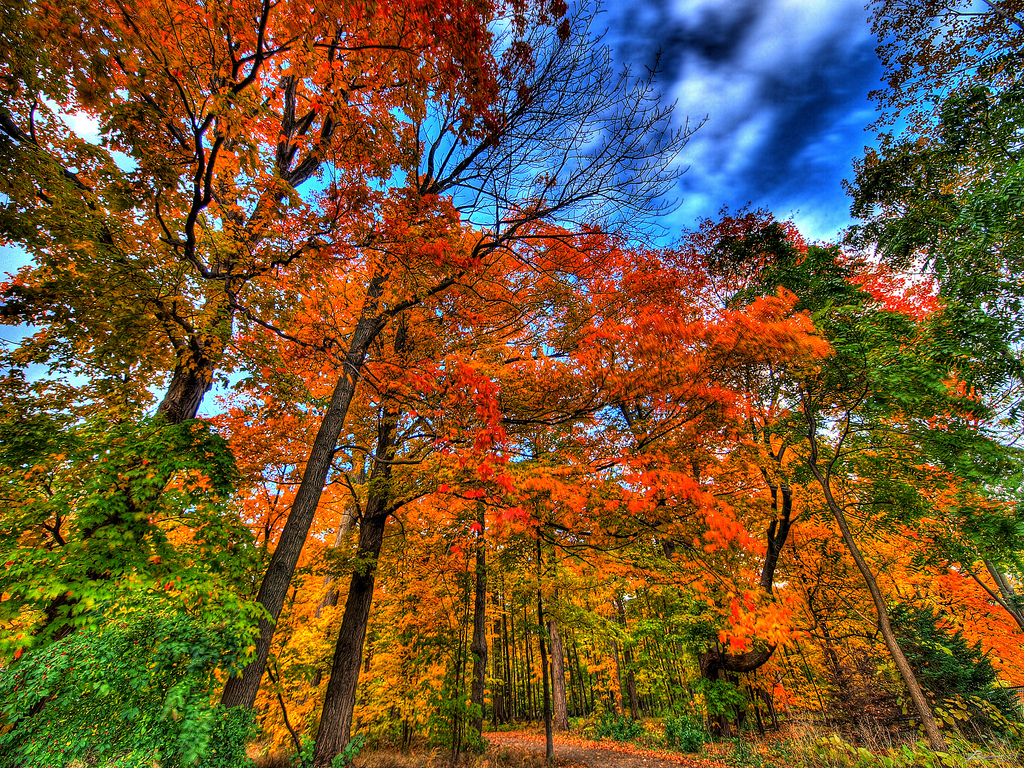HDR and the Fall go together like peas and carrots