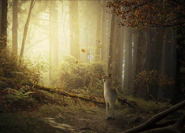 Create a fantasy deer photo manipulation in Photoshop