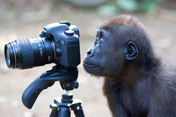 monkey-with-camera