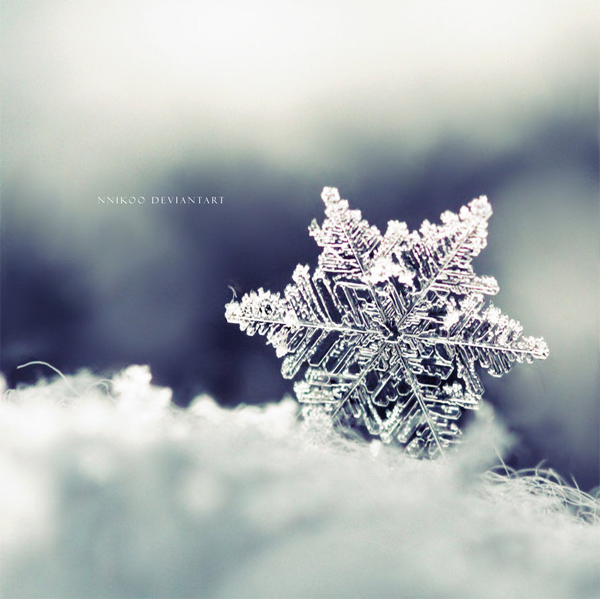 The Winter Dream by nnIKOO