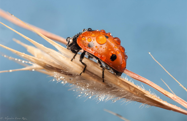 Manual focusing can help produce breathtaking macro shots like this one! Photo by Alejandro Ferrer Ruiz