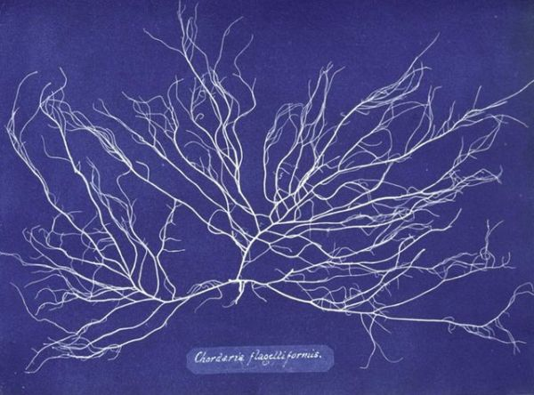 photo by Anna Atkins