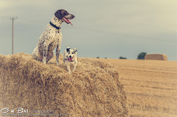 Doggy walks around Widford by GnBri Photography