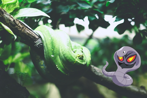Snake Pokemon Go Picture