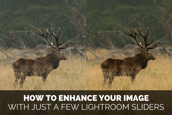 How to Make Your Image Pop in Lightroom