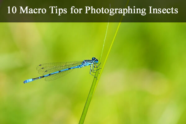 photographing insects-insects1