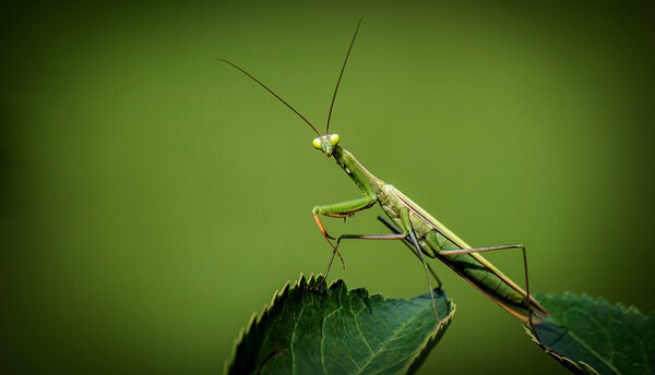 photographing insects-insects3
