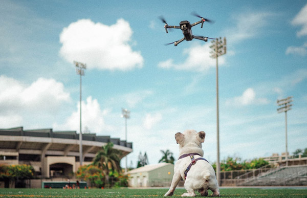 drone flying over dog