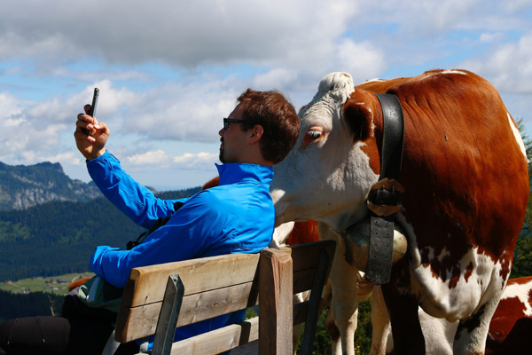 man taking selfie with cow